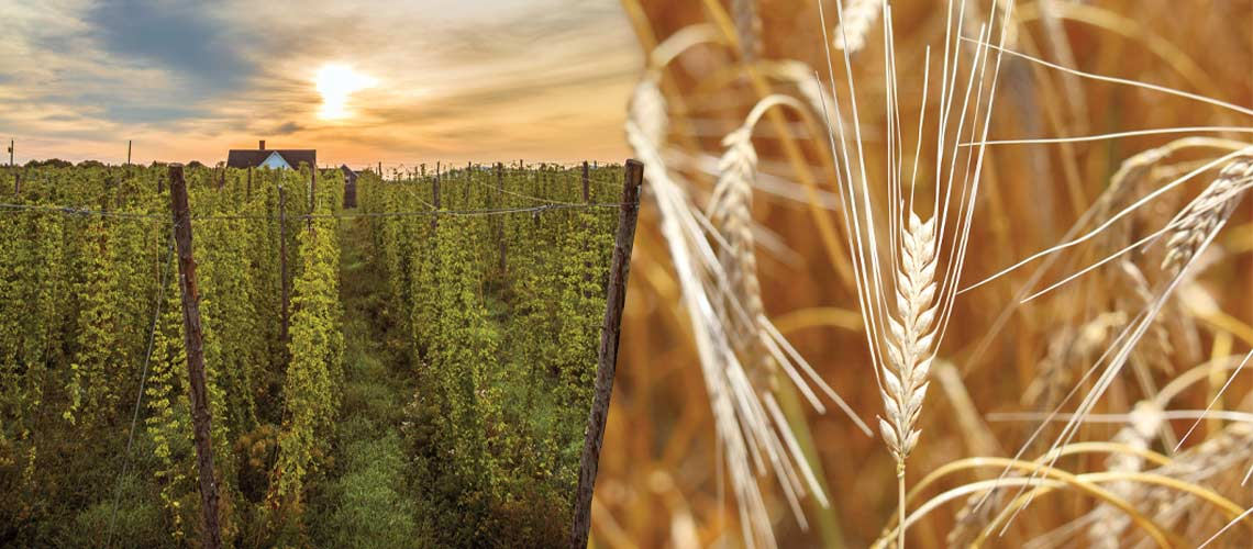 2019 World Barley and Hops Report