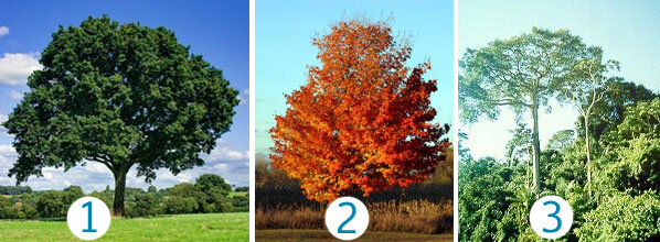 Which trees