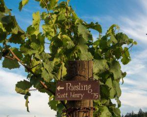 Brooks 201 Class 'Riesling' @ Brooks Wines | Amity | Oregon | United States