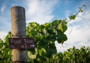 Varietal Class 201 'Pinot Noir Around the World' @ Brooks Winery | Amity | Oregon | United States