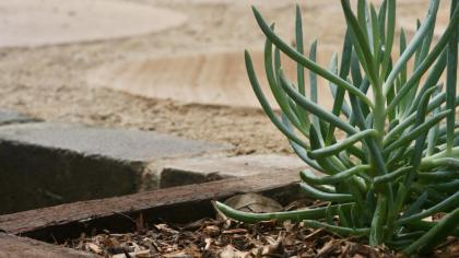 Planting Design Sydney