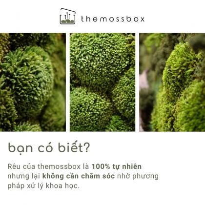 themossbox