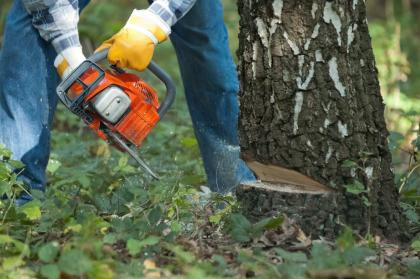 Tree Care Lauderdale