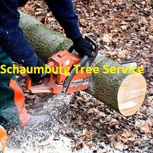 Schaumburg Tree Service