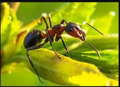 Pest Control Land O Lakes