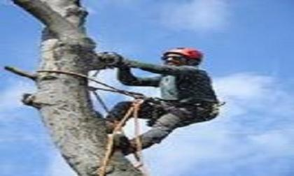 Columbus Georgia Tree Removal