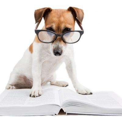 Eazy dog trainer sydney