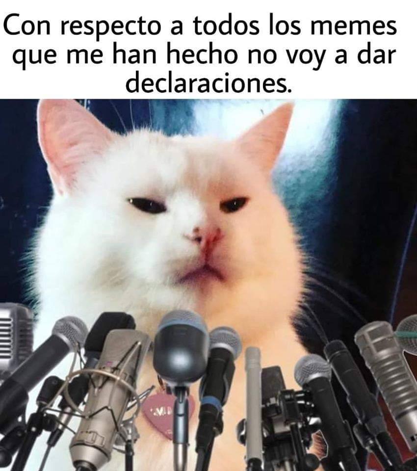 Los 15 Memes Más Divertidos Del Gato Que Es Viral
