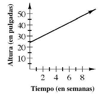 First quadrant graph, x-axis labeled, time (in weeks), y-axis labeled, height (in inches), with an increasing line starting at the point (0, comma 24), and passing through the point (5, comma 39).
