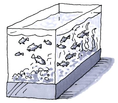 3-100 aquarium