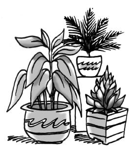 1-33 Plants
