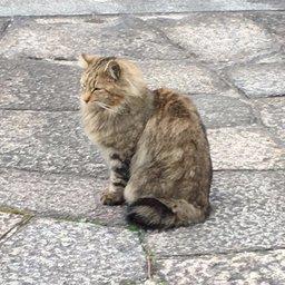 yama(�輩�猫��り����)