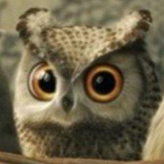 Main Owl 🦉