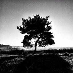derbaum