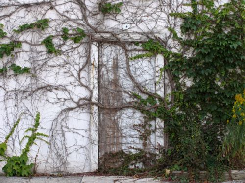 Photo of an old building whose door and walls are overgrown with vines. Title: Access Denied.