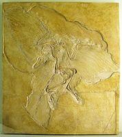 Naturkundemuseum Berlin - Archaeopteryx - Eichstätt.jpg