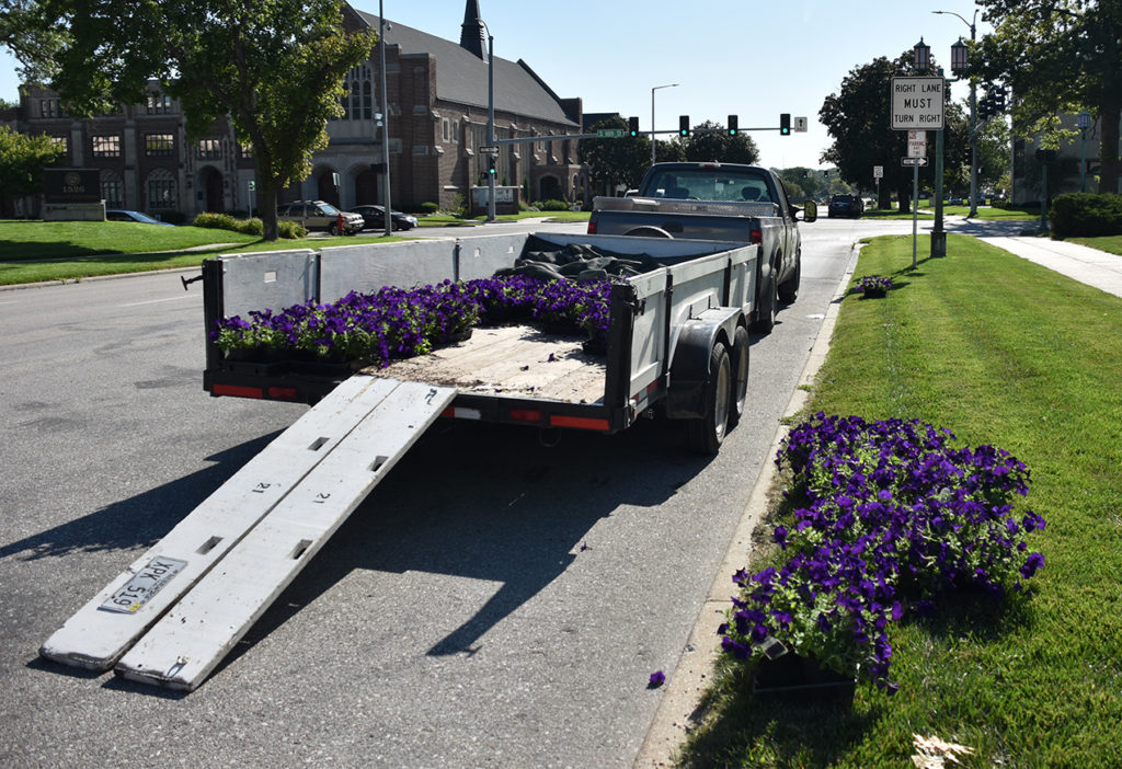 Trailer full of petunias being unloaded outside the Capitol