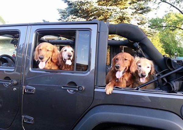 Dogs in 2014 Jeep Wrangler