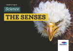 Standfor Projects - The senses - Level 1