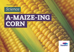Standfor Projects - A-maizeing corn - Level 4