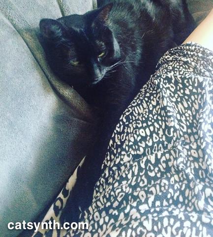 Luna providing comfort.