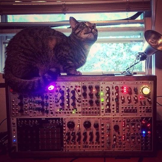Cat on Modular Synthesizer