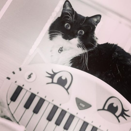 Cat and Toy Piano