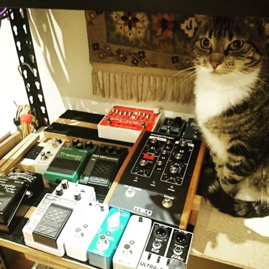 Cat, Moogerfooger and other pedals