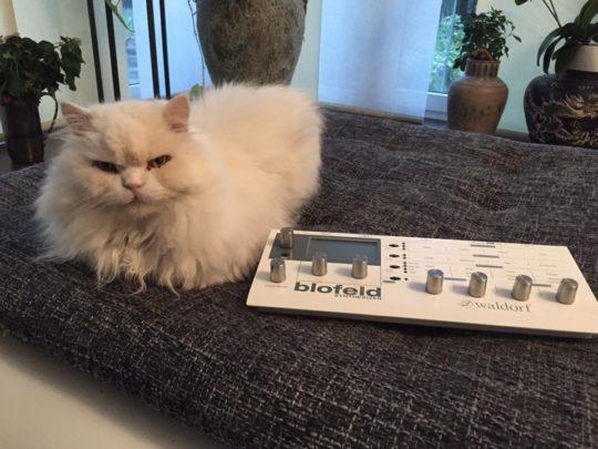 Cat and Waldorf Blofeld