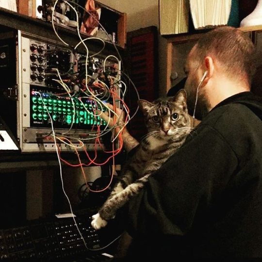 Modular synth and cat