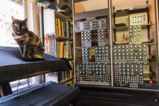 Cat on Minimoog next to Modular synth
