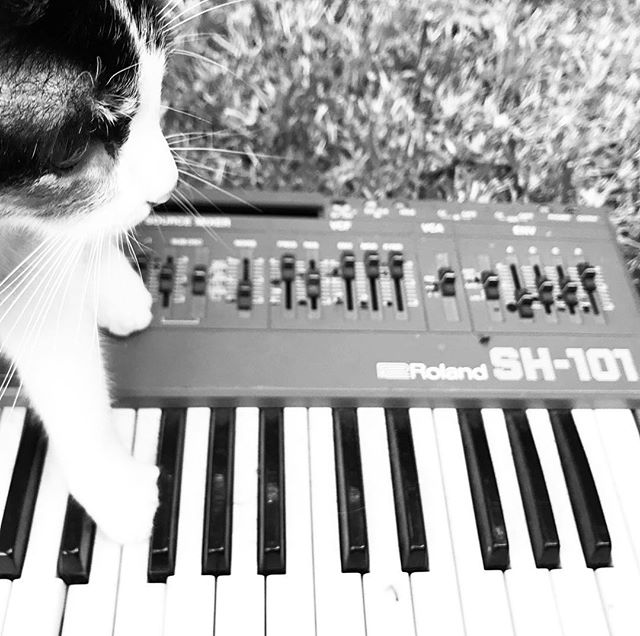 Cat with Roland SH-101 synthesizer