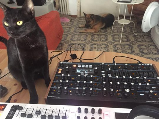 Black cat with Novation Peak Synthesizer