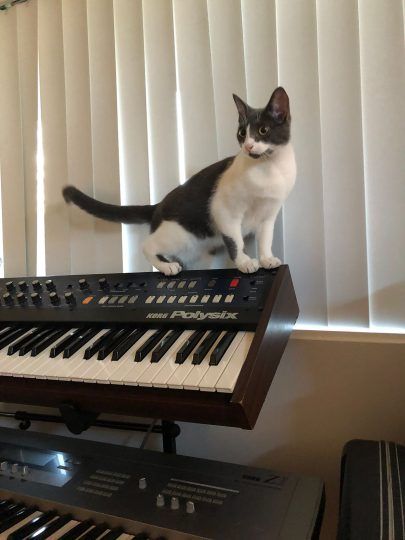 Cat and Korg Polysix