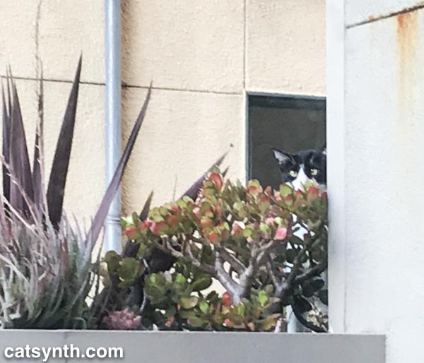 Closeup of neighbor cat
