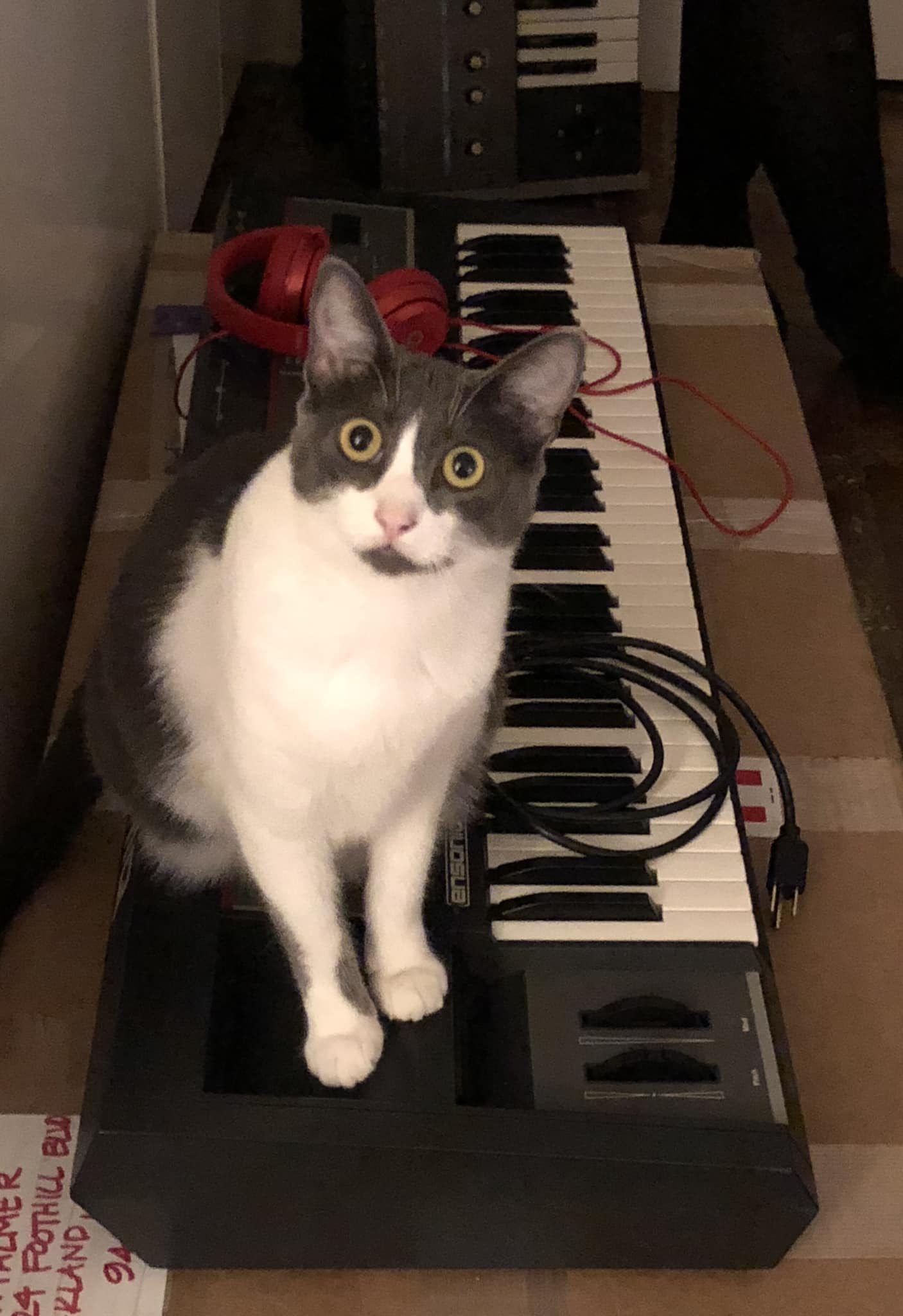 Gracie and Ensoniq SQ-80