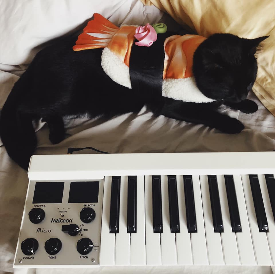 CatSynth Pic: Luna and Mellotron Micro for Halloween