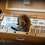 CatSynth Pic: Modal Electronics Modulus 002 Unboxing