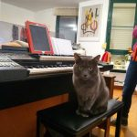 CatSynth Pic: Netwon and Yamaha Electone