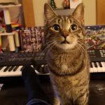 CatSynth Pic: Nico and Yamaha MOXF6