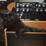 CatSynth Pic: Marcel, Moog DFAM, and Box
