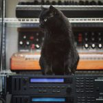 CatSynth Pic: Marcel, Korg M1R, and Minimoog