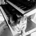 CatSynth Pic: Prophet 12 and MOTIF XF-7