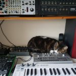 CatSynth Pic: Bonnie in the Studio