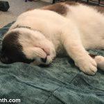 Weekend Cat Blogging with Big Merp