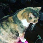 CatSynth Video: Quinn Djinn
