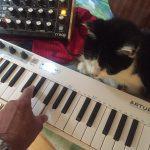 CatSynth Pic: Mojo, Arturia Keystep, Moog Minitaur