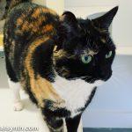 Weekend Cat Blogging: Cat Town