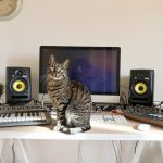 CatSynth Pic: Access Virus and Roland SH-101