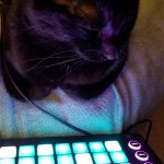 CatSynth Pic: Novation Circuit